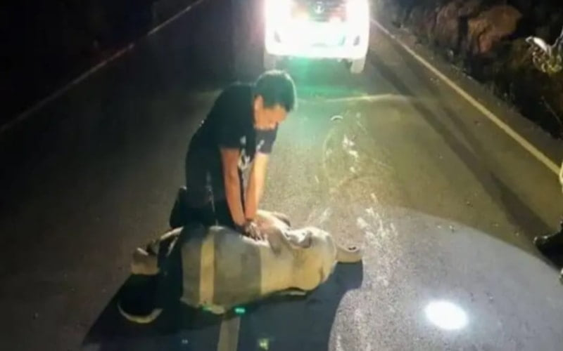 Baby elephant hit by motorcycle survives after CPR